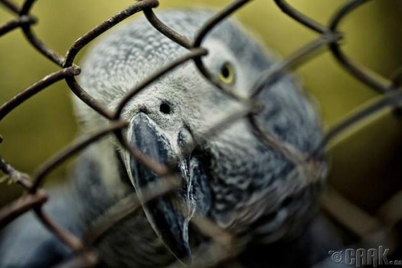 Амьтад ганцаардлаас болж үхдэг