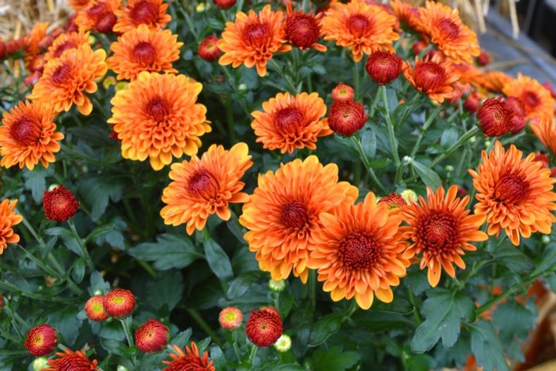 Удвал цэцэг