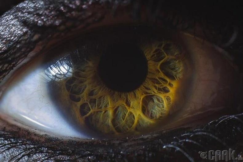 """""""Ер бусын нүд"""""""
