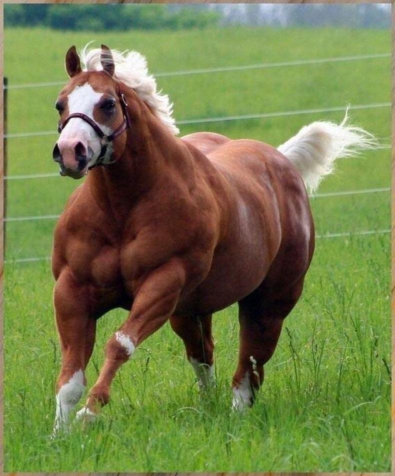 Таван морины хүчтэй морь