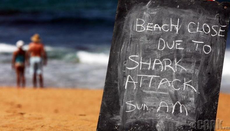 АНУ-д аварга загасны дайралтад хүмүүс хамгийн их өртдөг