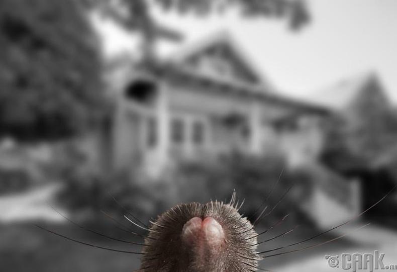 Хулгана