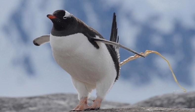 Өхөөрдөм оцон шувуунуудын тухай таатай бус баримтууд