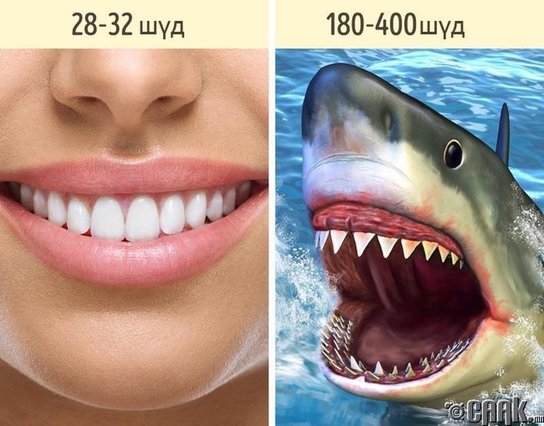Бид ганцхан эгнээ шүдтэй