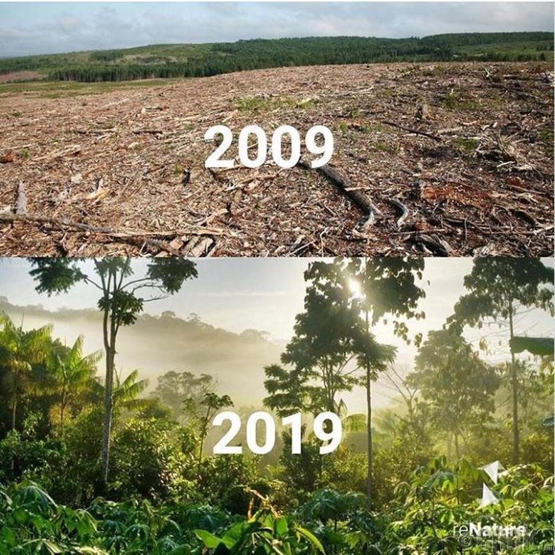 Сүйдсэн ширэнгэн ой эргэж сэргэсэн нь