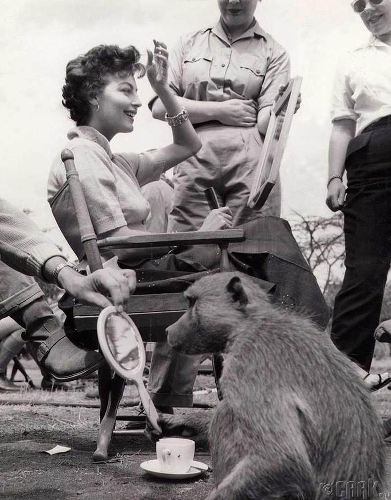 """Жүжигчин Ава Гарднер, Бабун нар """"Mogambo"""" киноны зураг авалтын үеэр, 1952 он"""