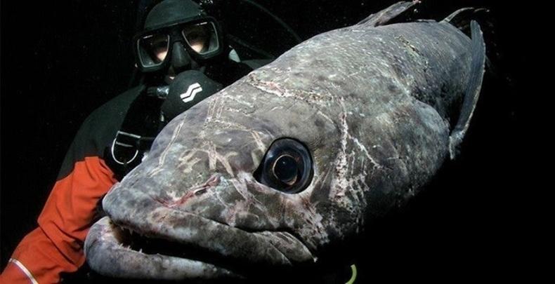 Хөлддөггүй загас