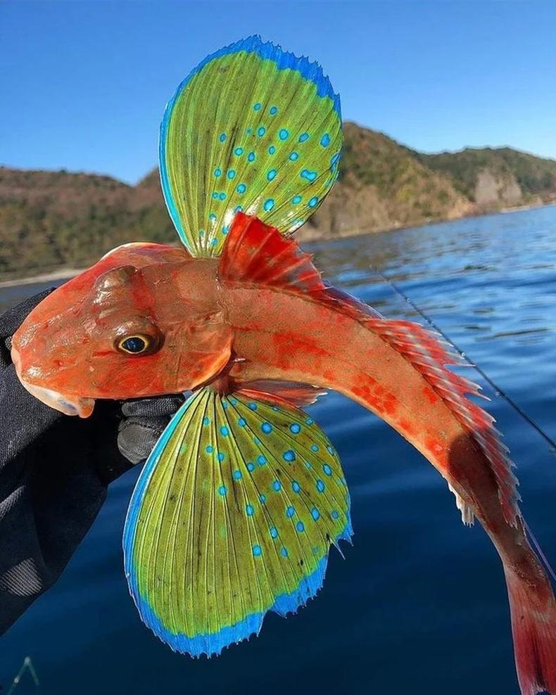 Далавч мэт сэлүүртэй загас