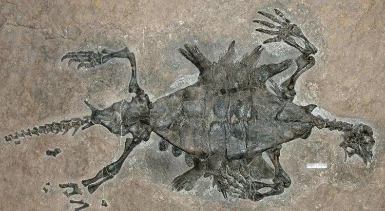Яст мэлхийн ойрын төрөл болох Odontochelys semitestacea