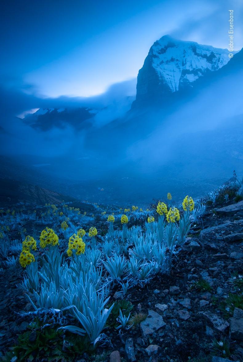 Цагаан хонин нүдэн цэцэгс, Габриел Ейзенбанд
