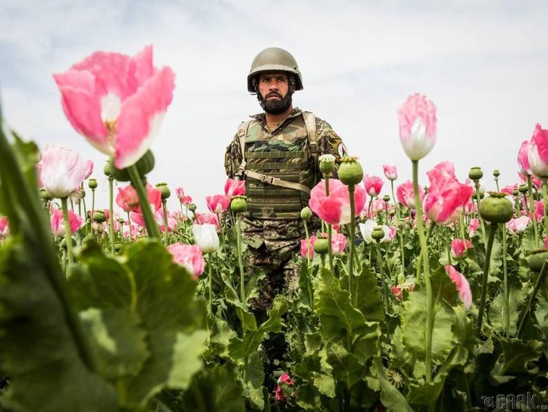 Афгани цэргүүд - Героин