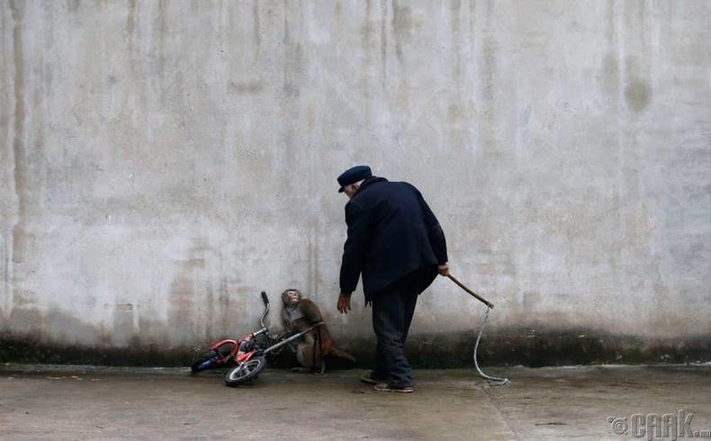Сургагч эзнээсээ айж буй сармагчин