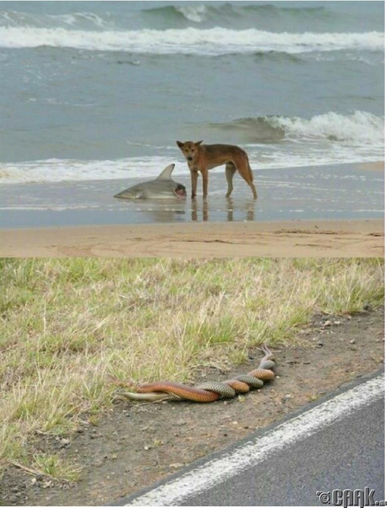 Австралийн байгаль