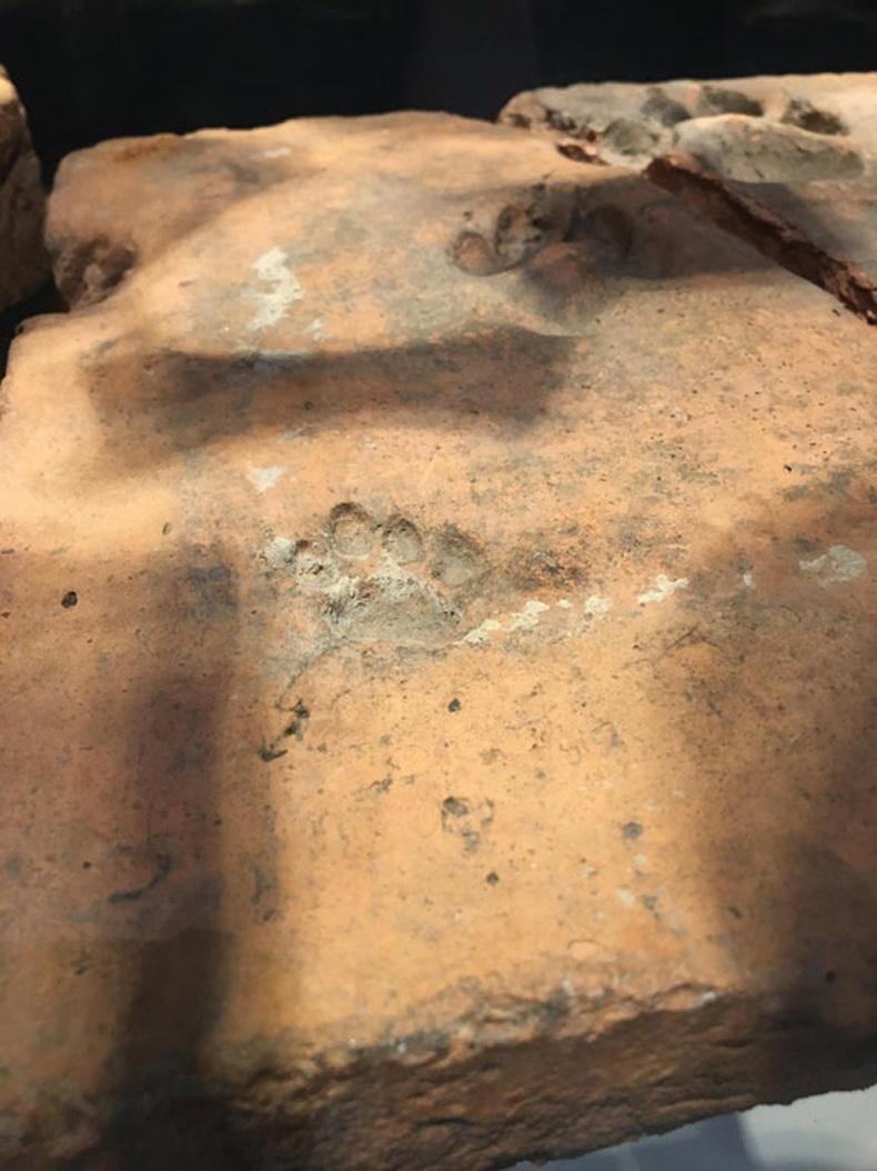 2000 жилийн өмнө амьдарч байсан нохойны мөр
