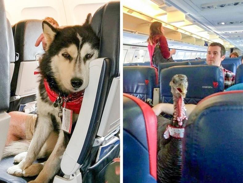Ганцаараа нисэхээс айж байвал гэрийн тэжээвэр амьтан авч яваарай