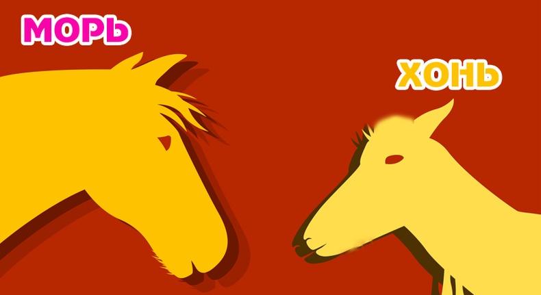 Морь, Хонь жилтний 2017 оны ерөнхий зурлага