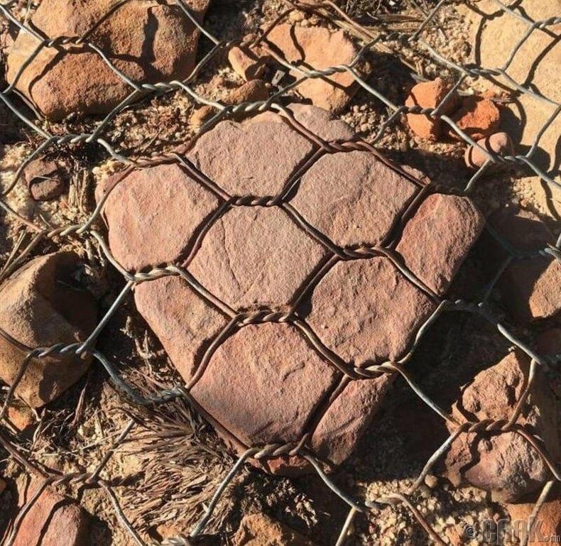 Хүмүүс дээр нь гишгэсээр төмөр тор чулуунд шигдэж оржээ