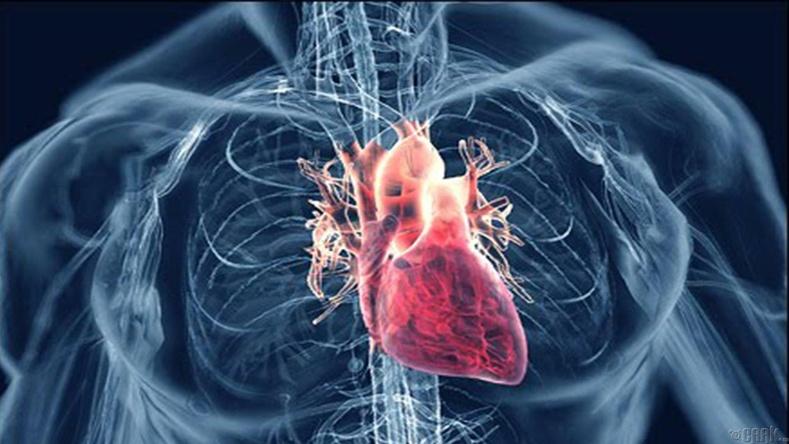 Зүрхний шигдээс үүсгэнэ