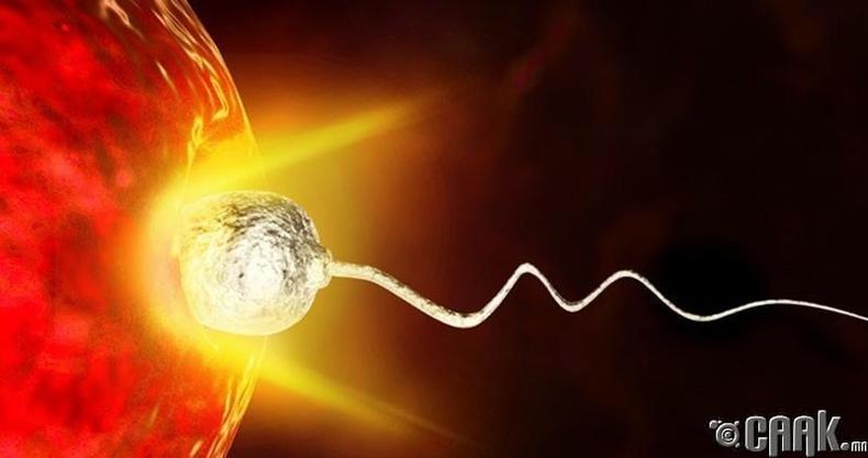 Өндгөн эс спермээ өөрөө сонгодог