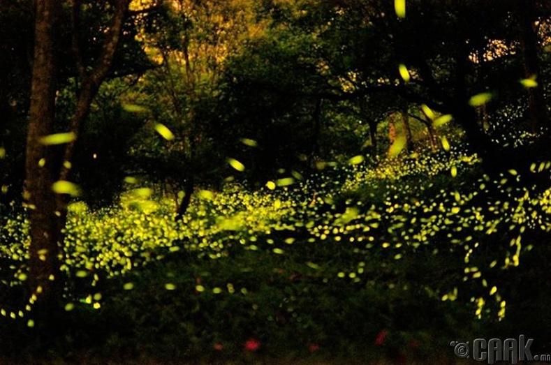 Гэрэл болон био гэрэлтүүлэг