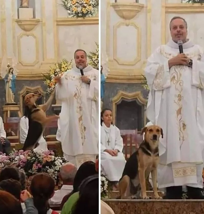 """""""Номлогч замдаа таарсан гудамжны нохойг эзэнтэй болгохын тулд сүмд авчирдаг."""""""