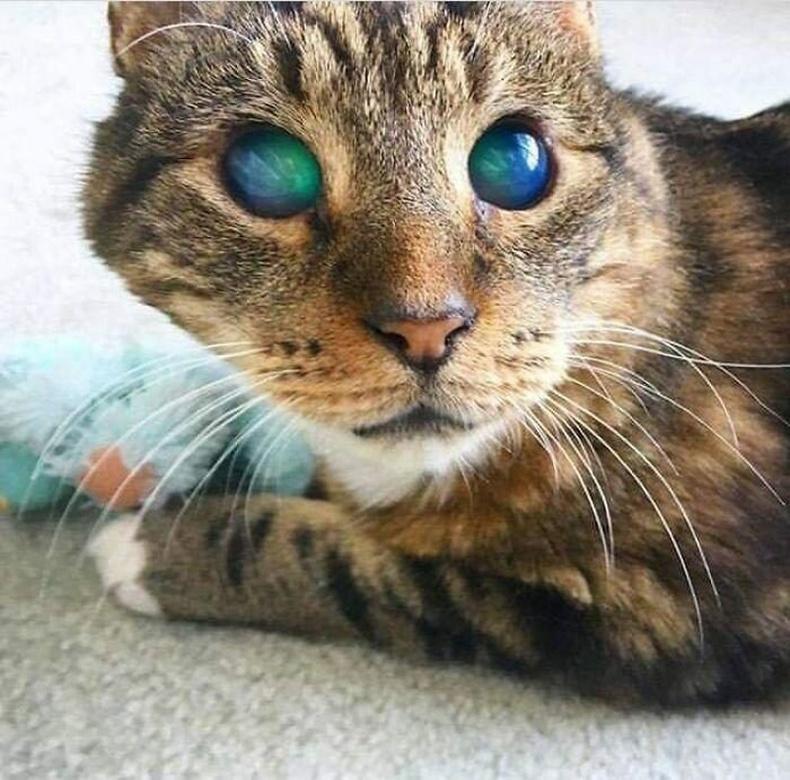 Хараагүй болсон муур
