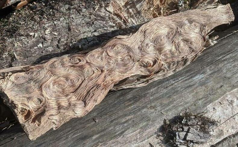 """Ван Гогийн """"Одод түгсэн үдэш"""" уран зураг шиг мод"""
