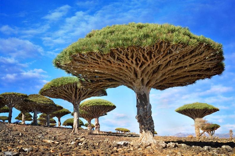 Балар эртний байгаль яг хэвээрээ хадгалагдан үлдсэн дэлхийн цорын ганц аралтай танилц!