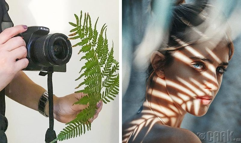 Ямар ч хамаагүй ургамал ашиглан тусгай сүүдэр гаргах боломжтой