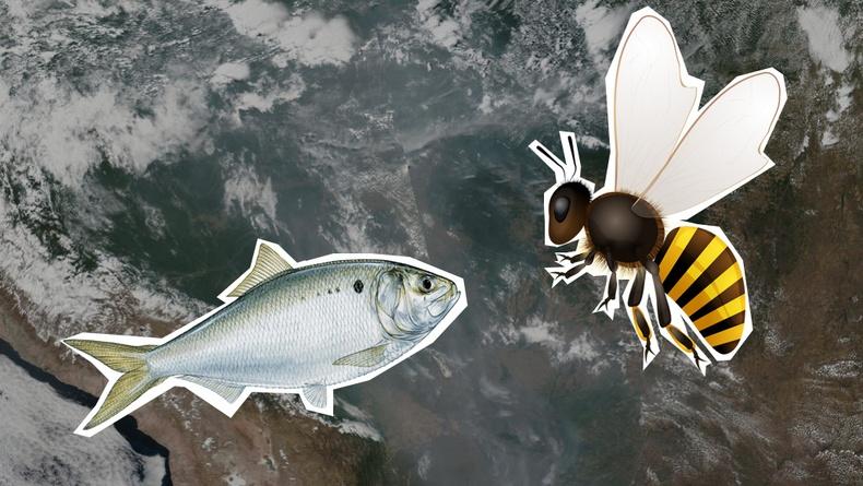 Эх дэлхийг маань аварч чадах 10 организм