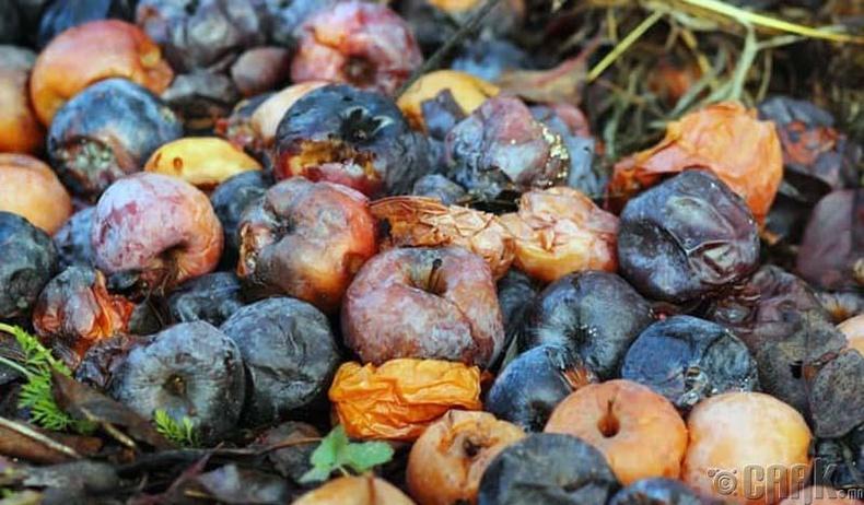 Муудсан жимс