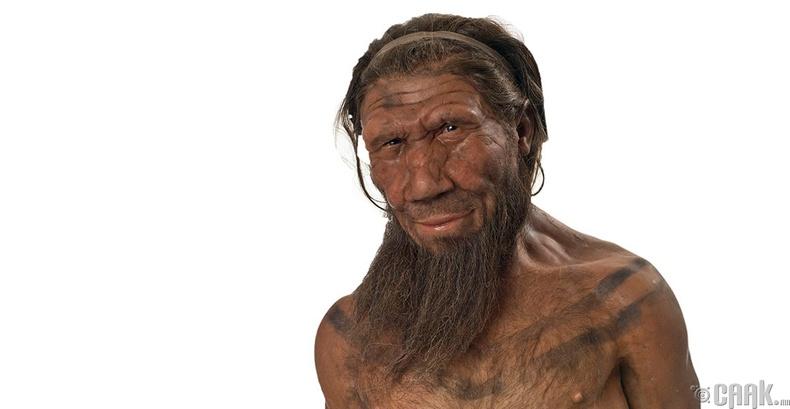 Неандертальчууд нэг нэгнээ барьж иддэг байсан уу?