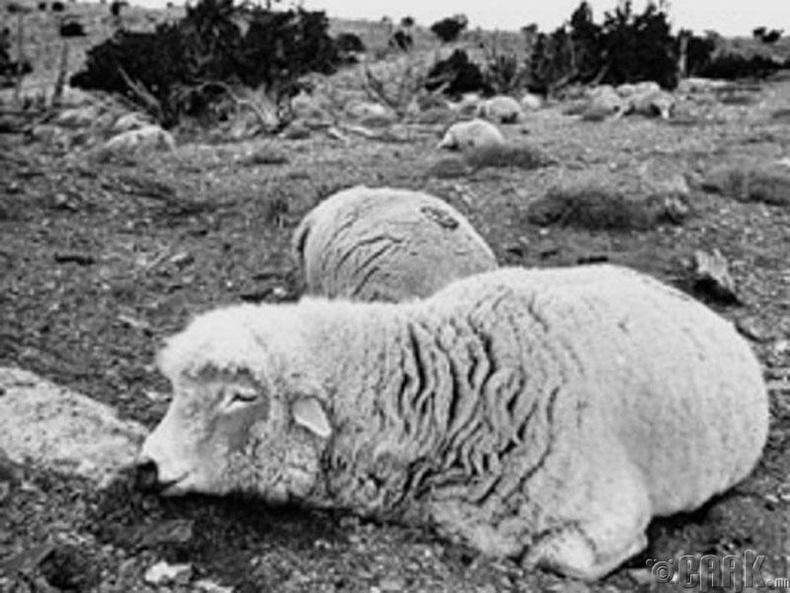 Хонины устгал: Америк дахь Гавлын хөндий