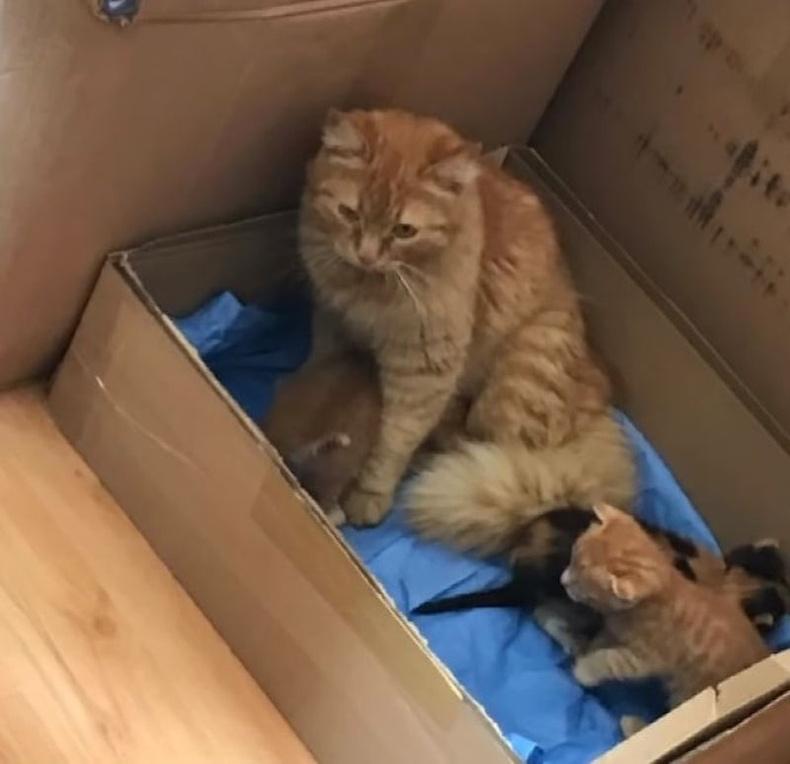 Муур ээжийг зулзагануудын хамт эмнэлэгт байрлуулжээ.