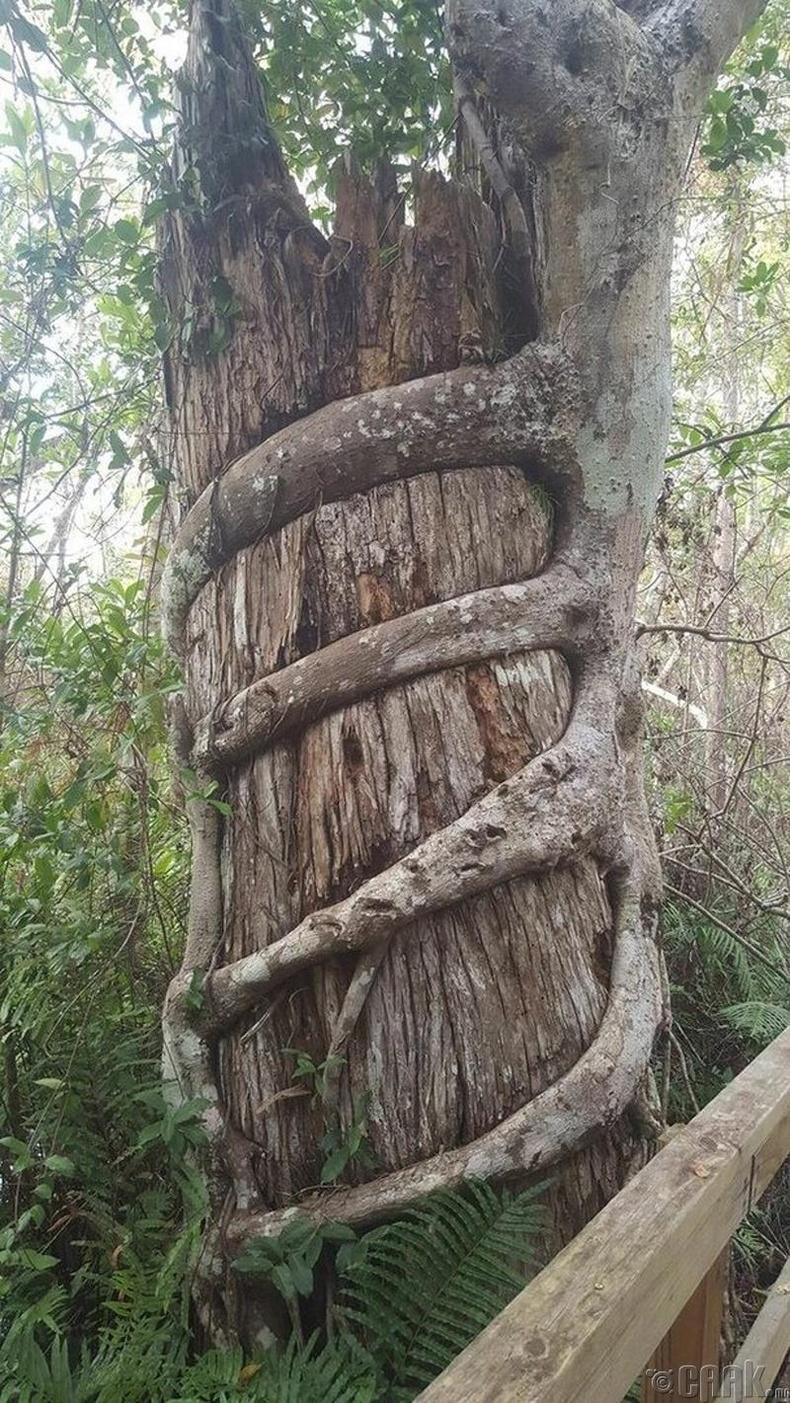 Моддын ертөнц дэх тэврэлт