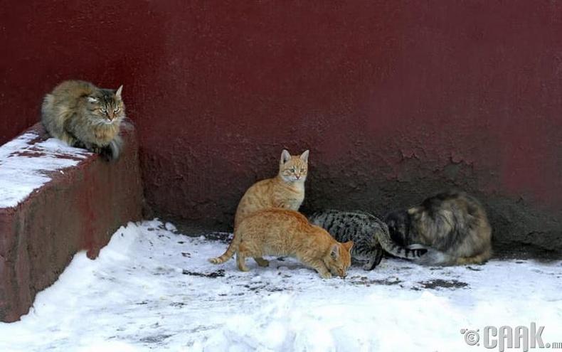 Херберт болон Жэйн Уолден  (Herbert Walden, Jane Walden) - Муур