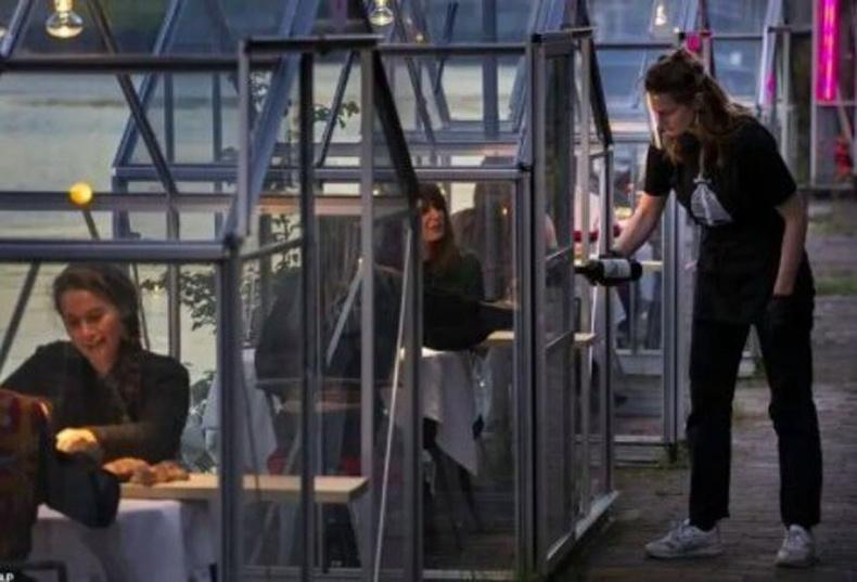 """Амстердам хот дахь """"Mediamatic Biotoop"""" ресторан цар тахлын үел ширээнүүдээ шилэн бүхээгтэй болгон аюулгүй байдлаа хангажээ"""