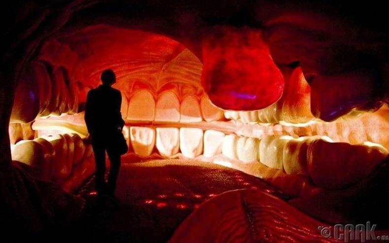 Нидерланд дахь хүний биеийн музей