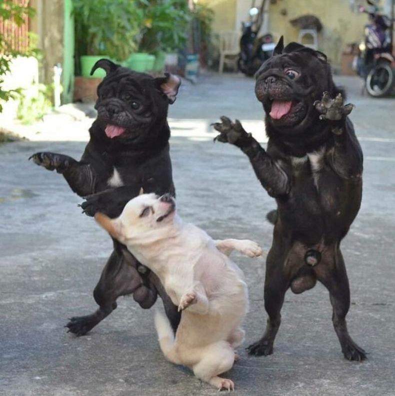 Хэн ч таныг хараагүй мэт бүжиглэ!