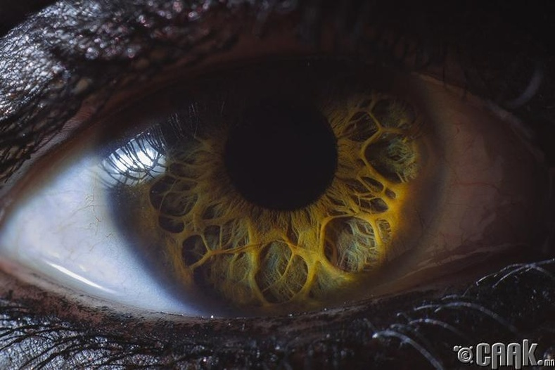 Хүний нүд