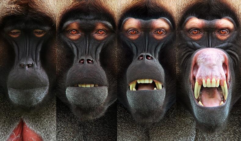 Нохой сармагчингийн нүүрний хувирал