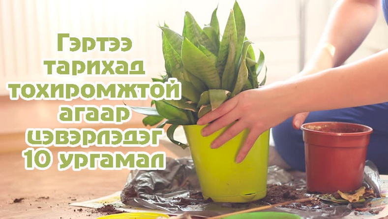 Гэртээ тарихад тохиромжтой агаар цэвэрлэдэг 10 ургамал