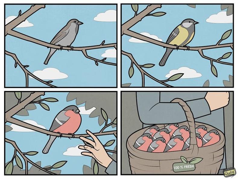 Бүрэн боловсроогүй шувуухай
