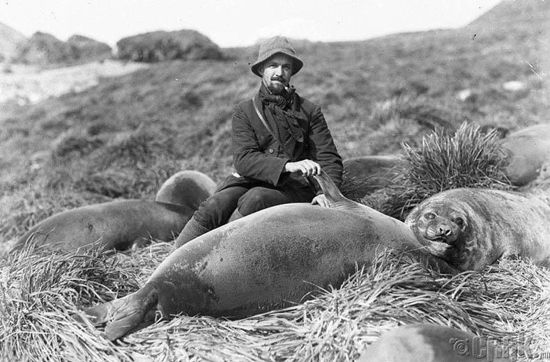 Австралийн судлаач Артур Сойер (Arthur Sawyer) Антрактидад далайн арслангийн хамт, 1913 он