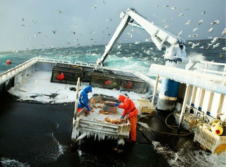 Хойд тэнгист хавч барьж буй ажилчид - Шуурга, хүйтэн усыг үл ажирна