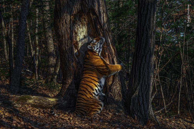 Мод тэврэн зогсож буй бар, Сергей Горшков