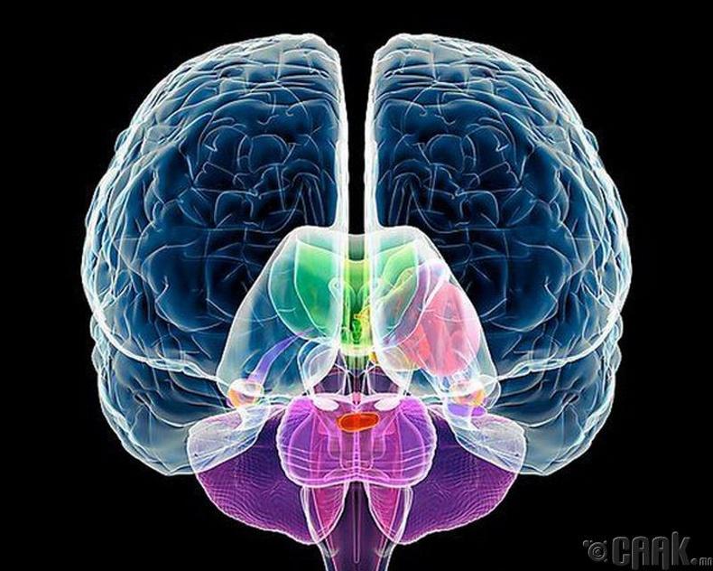 Бид бодохдоо: Зарим хүмүүсийн тархины зүүн хэсэг, зарим хүмүүсийн тархины баруун хэсэг илүү идэвхтэй ажилладаг