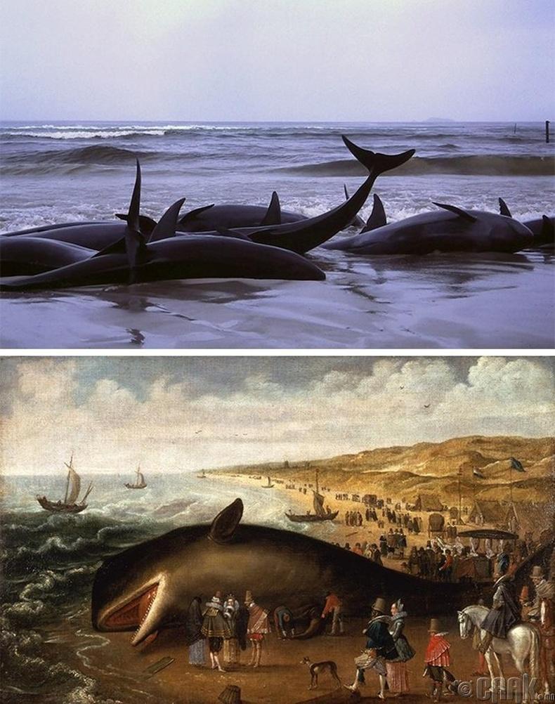 Халимнууд яагаад далайн эрэг дээр гарч үхдэг вэ?