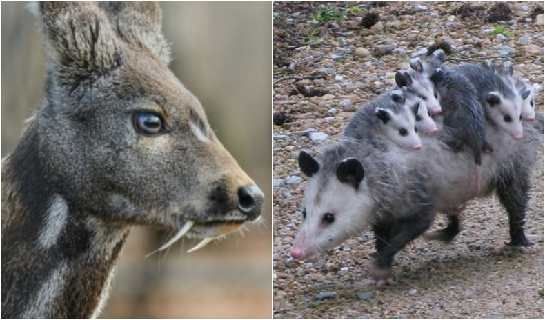 Амьтдын ертөнц дэх гайхалтай дасан зохицлын жишээнүүд