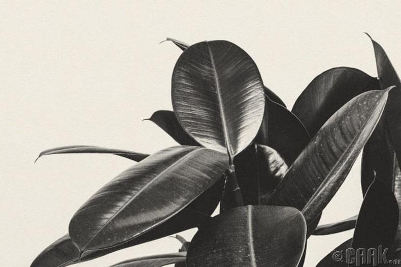 Ургамал, цэцэг арчлах